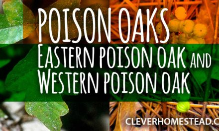 POISON OAKS: Eastern poison oak and Western poison oak. A Helpful Illustrated Guide.