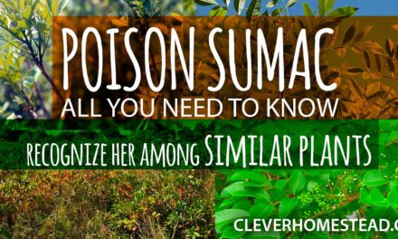 POISON SUMAC: the Ultimate Helpful Illustrated Guide.