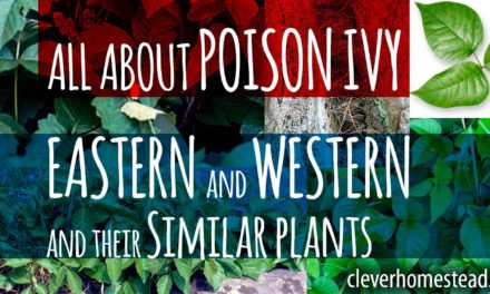 POISON IVIES: Eastern poison ivy and Western poison ivy