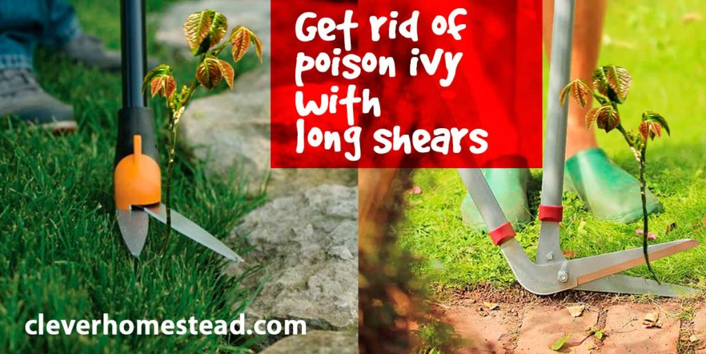 Get rid of poison ivy with long shears.